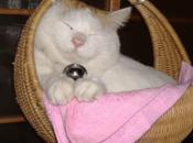 Famous Shironeko, Cat, Life-Size Twin Doll