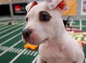 Super Bowl, Schmooper Annual Puppy Bowl Here!