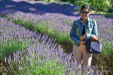 A Trip to the Jersey Lavender Farm