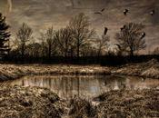 Types Importance Wetlands