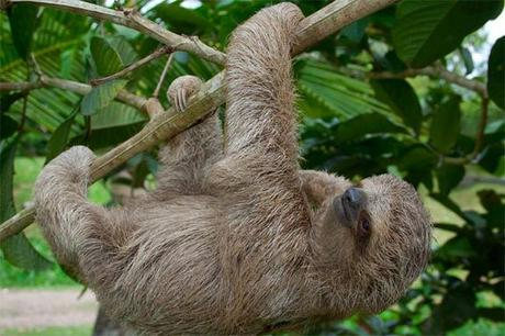 What is a sloth?