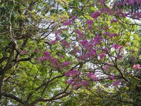 The Garden City of Bangalore