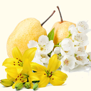 Asian Pear Lily Fragrance