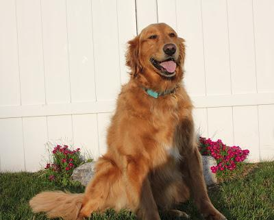 AvoDerm Revolving Menu Line Campaign for Dogs