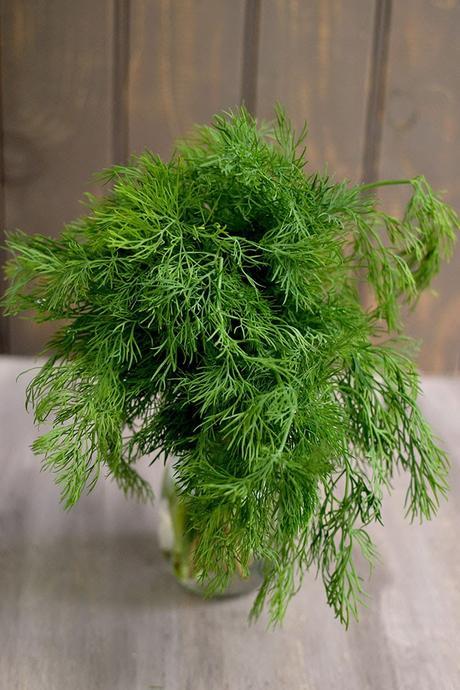 Fresh Dill leaves