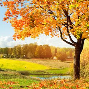 Autumn Woods Fragrance
