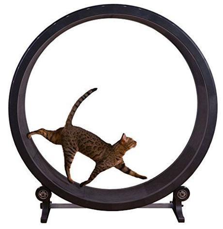 CAT-TRACK-FRANCOIS-ET-MOI