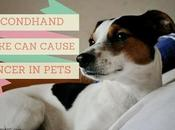 Secondhand Smoke Cause #Cancer #Pets