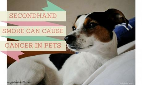 Secondhand Smoke Can Cause Cancer In Pets