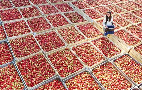 Morrisons Extends English Apple Season