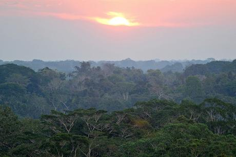 Climate Change: The Next Generation: Amazon carbon sink is in decline as trees die off faster