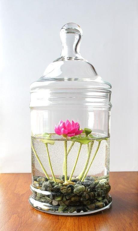 Miniature Pink Lotus Water Lily Terrarium: