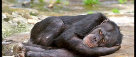 Humans evolved to sleep less