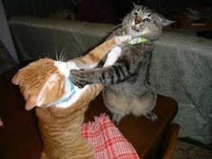 It's a feminist catfight!