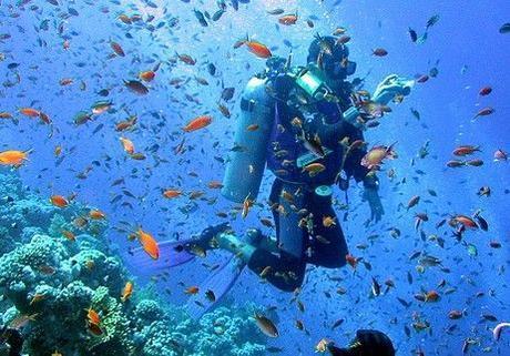 Egypt Diving