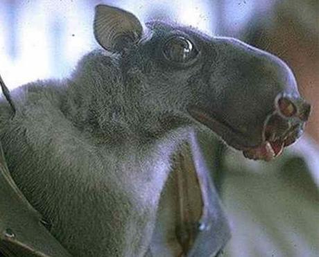 Top 10 Rare And Unusual Species of Bats