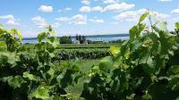 A Tale of Two Wine Regions: Seneca Lake, New York and Balatonfüred-Csopak, Hungary