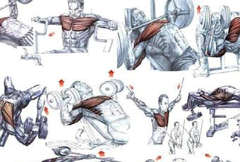 Chest Workout Chart Picture - Most Popular Workout Programs
