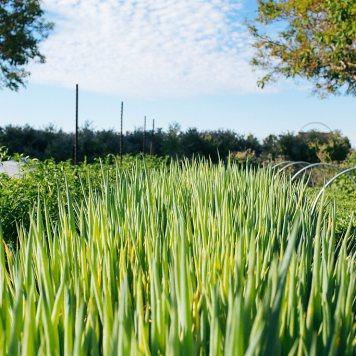 Sonoma Series | Kendall Jackson Wine Estate & Gardens