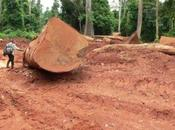 Demand African Timber Soars, Birds Ultimate Price