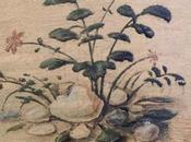 Plants Venice Padua