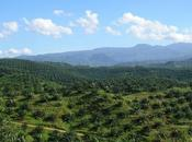 World's Largest Ecological Study Palm Deforestation Releases Five Year Review