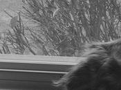 Bird Watching #BlackandWhiteSunday