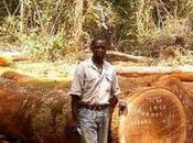 Billions Worth Imports Linked Illegal Deforestation Parliament Magazine