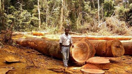 Billions worth of EU imports linked to illegal deforestation | The Parliament Magazine