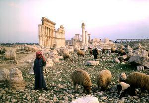 Overgrazing is a major cause of the horror in Syria