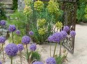 Inspiration Jardins Agapanthe (part