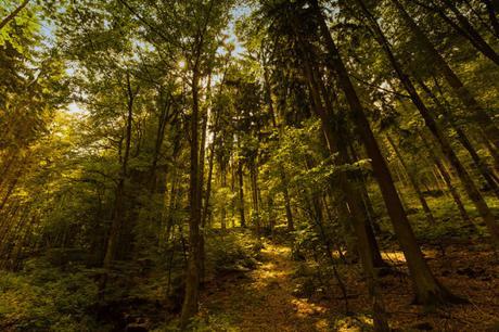 temperate deciduous biome paper Temperate deciduous forest biome essays: over 180,000 temperate deciduous forest biome essays, temperate deciduous forest biome term papers, temperate deciduous.
