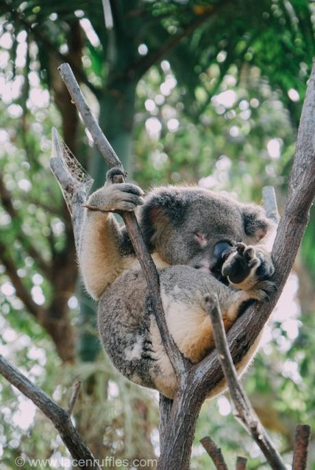Eco Travel: Currumbin Wildlife Sanctuary, Gold Coast