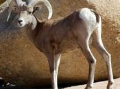 Various Desert Animals