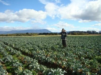 Working on a lonely farm in Poatina in 2010
