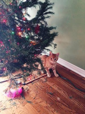 PHOTOS: Crazy cats and bad dogs ruin Christmas