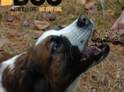 Doggy Christmas Gift Idea: Tasty Treat Giving #DOGforDOGPetSmart