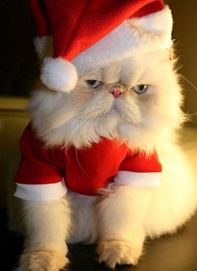 Cat Christmas Trees