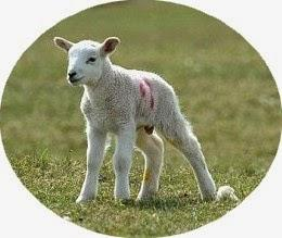 Police raid a brothel ~ arrest a woman for keeping a lamb !!!!
