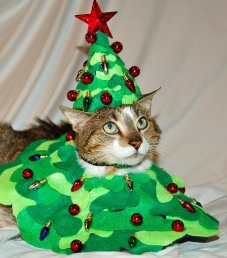 Top 10 Festive Costume Christmas Tree Cats
