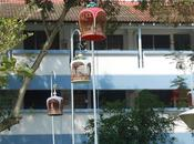 Have Seen Hanging Bird Cages Singapore