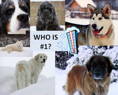 Photos: 10 best cold weather dog breeds for a family with children