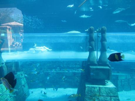 Aquaventure aquarium