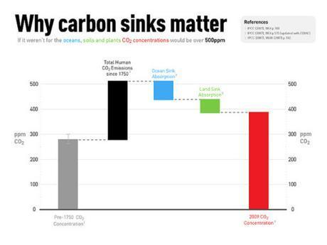 carbon-sinks