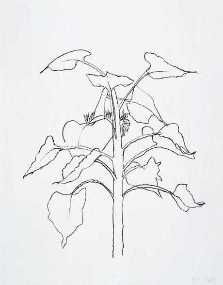 Ellsworth Kelly Sunflower I Drawing