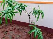 Rebirth Tree