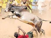Jallikattu Lifted Virumandi Bull