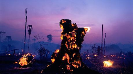 Brazil inflames forest fires with pro-deforestation laws