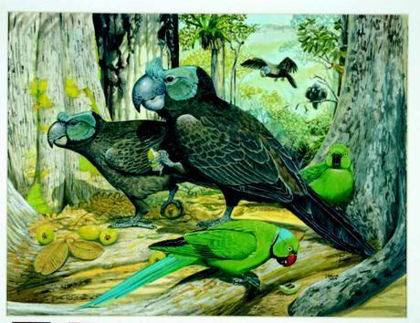 Cranky Parrots? Weird Island Animals Described in Long-Lost Report