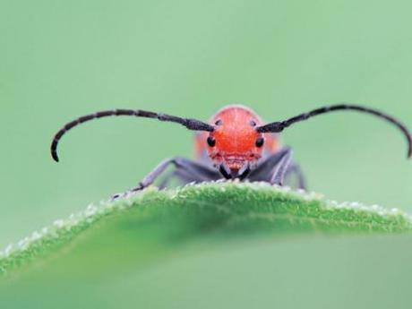 10 Bugs That Are 5,000 Times Cuter Than Puppies Or Kittens